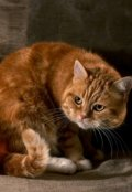 "Book cover ""Едят ли коты сухари? Не любят, но иногда едят!"""