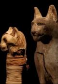 """Book cover """"В Египте найдено 70 миллионов мумий животных"""""""