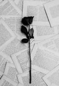 """Portada del libro """"Lo que necesito decir."""""""