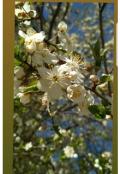 "Обкладинка книги ""Моя Весна"""