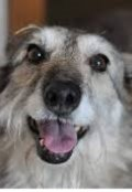 """Обкладинка книги """"Історія одного собаки, Міксі."""""""