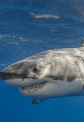 """Portada del libro """"El Ataque del Tiburon Blanco"""""""