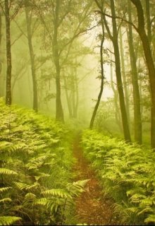"Книга. ""Хочу в ліс"" читати онлайн"