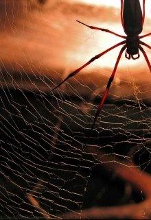 """Книга. """"Лохвицьке павутиння"""" читати онлайн"""
