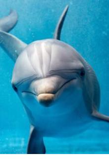 """Libro. """"Los delfines del lago"""" Leer online"""