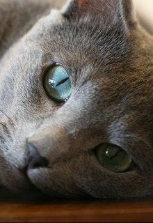 """Libro. """"Ojos De Gato"""" Leer online"""