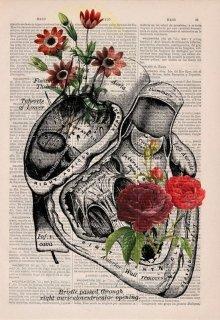 """Libro. """"Amor entre libros"""" Leer online"""