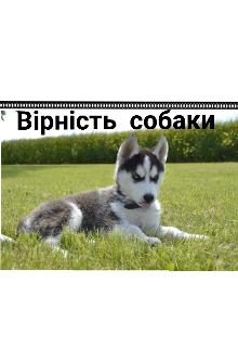 """Книга. """"Вірність собаки"""" читати онлайн"""
