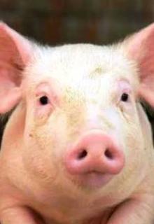 """Libro. """"Los cerdos no pueden ver el cielo"""" Leer online"""