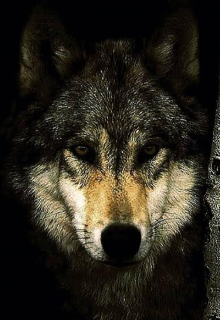 """Book. """"Rise of the wolves"""" read online"""