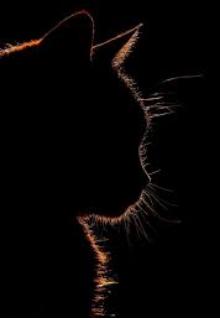 """Libro. """"El Gato Maldito"""" Leer online"""